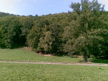20090920.jpg